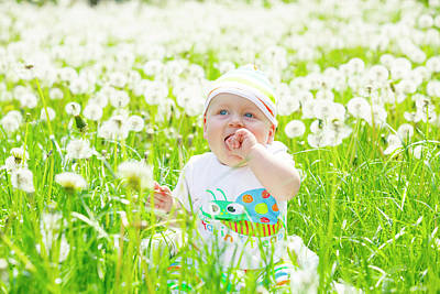 Childcare Photograph - Baby Boy With Dandelions by Wladimir Bulgar