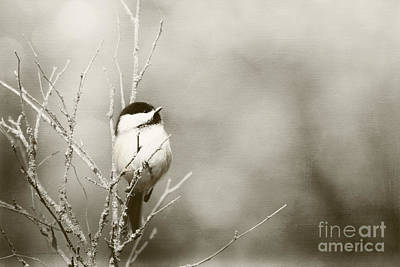 Blackcap Photograph - Baby Its Cold Outside by Beve Brown-Clark Photography