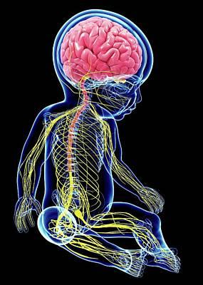 Biomedical Illustration Photograph - Baby's Nervous System by Pixologicstudio