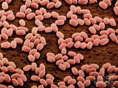 Bacillus Anthracis Art Print