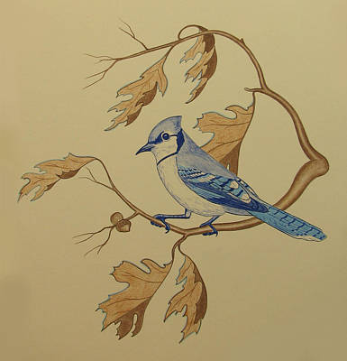 Bluejay Drawing - Backyard Jay by Lonnie  C Tapia