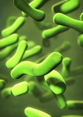 Organism Wall Art - Photograph - Bacteria by Equinox Graphics/science Photo Library