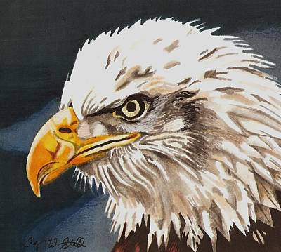 Drawing - Bald Eagle by Cory Still