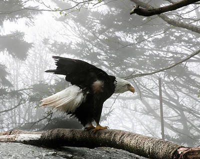 Photograph - Bald Eagle by Mary Almond