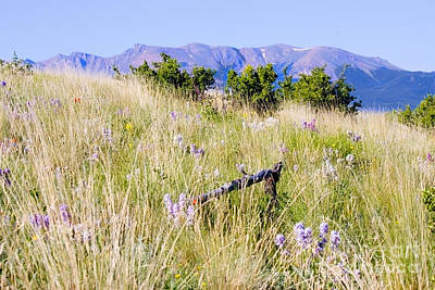 Steven Krull Royalty-Free and Rights-Managed Images - Bald Mountain Trail by Steven Krull