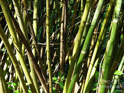 Photograph - Bamboo Canes by Lew Davis
