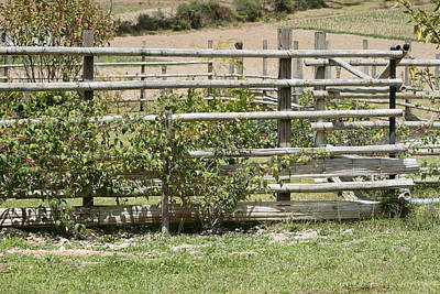 Bamboo Fence In A Pasture Art Print