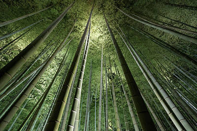Bamboo Photograph - Bamboo Night by Takeshi Marumoto