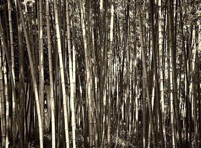 Photograph - Bamboo by Robert Knight