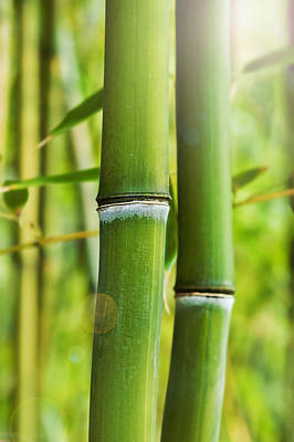 Photograph - Bamboo Shoots by Marianne Campolongo