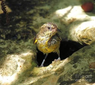 Photograph - Bananaquit Bird Bath by Adam Jewell