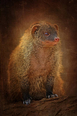 Sahara Mixed Media - Banded Mongoose by Heike Hultsch