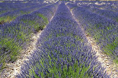 Banon, Provence, France Art Print