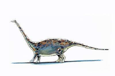Paleozoology Photograph - Barapasaurus Dinosaur by Deagostini/uig