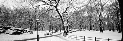 Bare Trees During Winter In A Park Art Print by Panoramic Images
