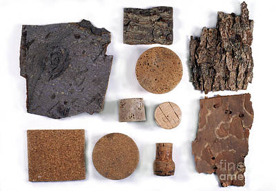 Stopper Photograph - Bark And Commercial Cork by Dr. Keith Wheeler