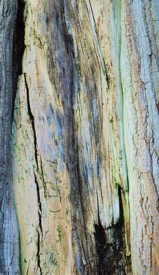 Photograph - Bark Bark by Todd Sherlock