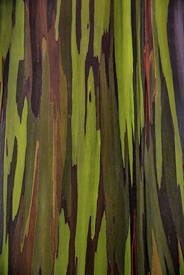 Bark Of The Rainbow Eucalyptus Art Print