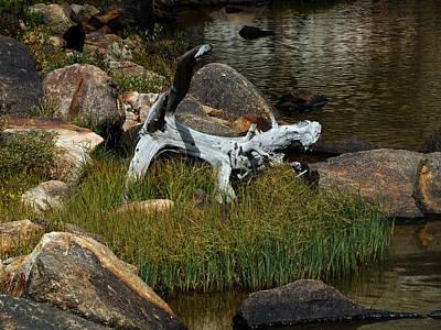 Photograph - Barking Dead Tree by Thomas Samida