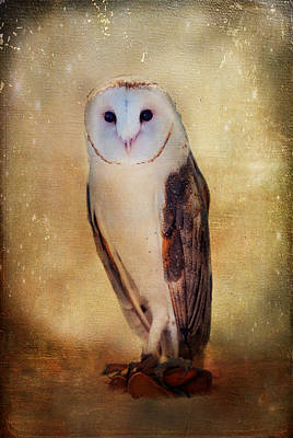 Photograph - Barn Owl by Barbara Manis