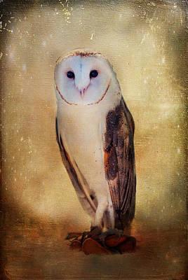 Photograph - Barn Owl by Barbara Manis