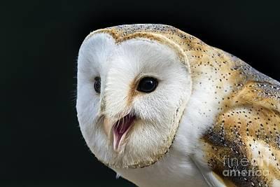 Barn Owl Calling Print by Linda Wright