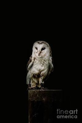 Barn Owl Photograph - Barn Owl by Shaun Wilkinson