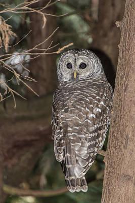 Water Droplets Sharon Johnstone - Barred Owl by David Gleeson