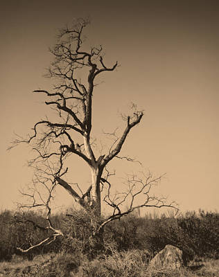 San Pasqual Photograph - Barren by Dave Hall