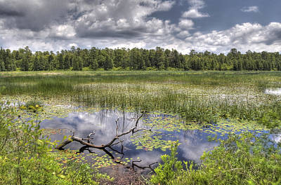 Photograph - Batsto Lake In Spring by Greg Vizzi