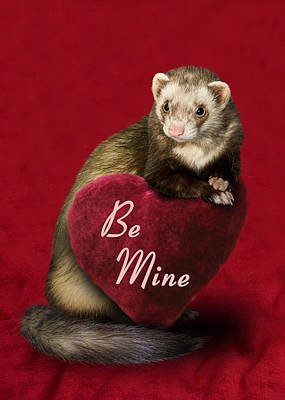 Photograph - Be Mine Ferret by Jeanette K