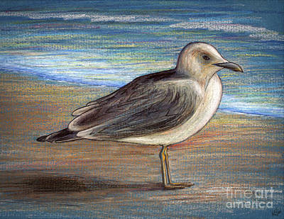 Drawing - Beach Bird by Walt Foegelle