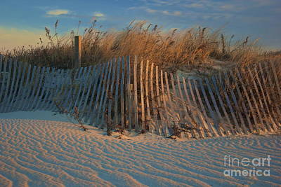 Photograph - Beach Dunes  by Amazing Jules