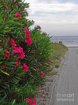 Photograph - Beach Road by Val Miller