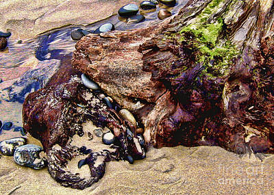 Beach Stump And Stones Art Print by Joseph Vittek