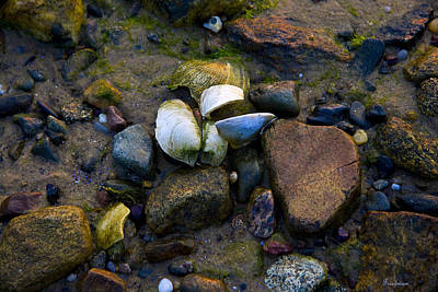Photograph - Beach Treasure by Michael Friedman