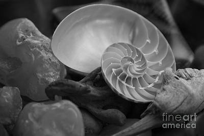 Photograph - Beach Treasures 2 by Jeanette French