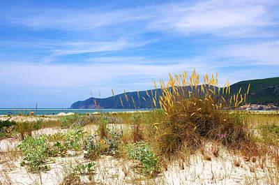 Water Photograph - Beach Vegetation by Carlos Caetano
