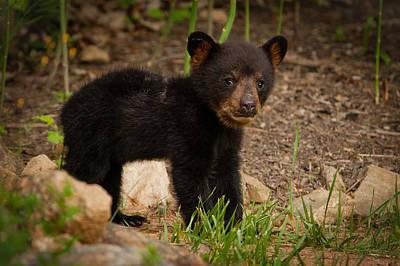 Photograph - Bear Cub by Joye Ardyn Durham