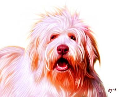 Bearded Collie Art Print by Iain McDonald