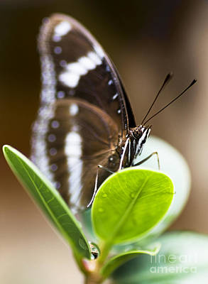 Butterflys Photograph - Beautiful Butterfly by Jorgo Photography - Wall Art Gallery