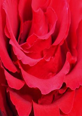 Photograph - Beautiful Close Up Of Red Rose Petals by Tracey Harrington-Simpson