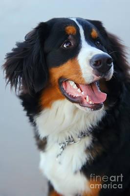 Beautiful Dog Portrait Art Print