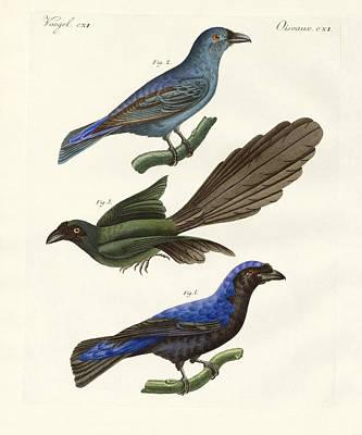 Beautiful Foreign Birds Art Print by Splendid Art Prints