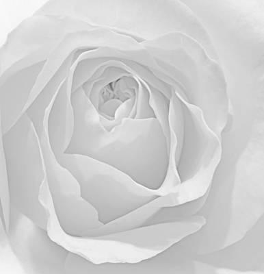 Beautiful Macro Close Up Of Fresh Sprring Rose Flower With Vibra Art Print by Matthew Gibson