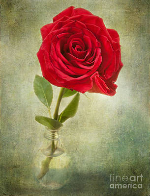 Beautiful Rose Art Print