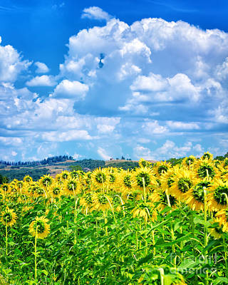 Photograph - Beautiful Sunflowers Field by Anna Om