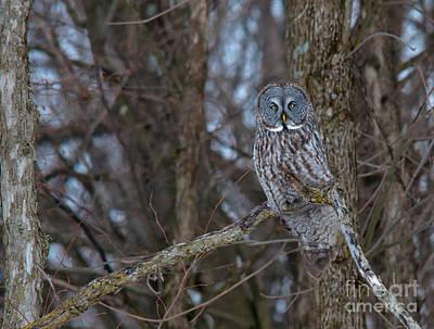 Owl Photograph - Beauty by Cheryl Baxter
