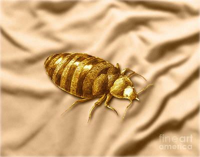 Bed Bug Art Print