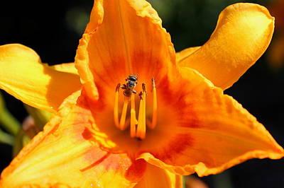 Amy Hamilton Animal Collage - Bee Mine by Reid Callaway